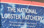 National Lobster Hatchery Padstow Cornwall